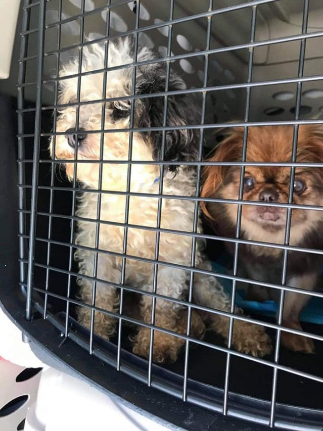 Animal Lovers Team Up to Save 100 Puppy Mill Dogs from Life 'Without the Joys of Being Loved'